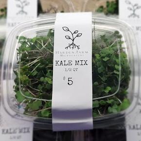 Kale Mix Microgreens
