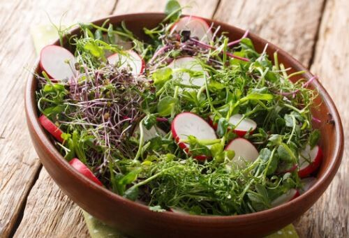 Salad Club Monthly Delivery (Free Ship $35+)