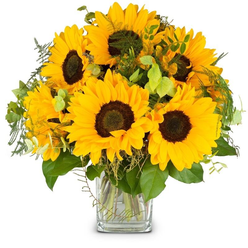 Sonnenblumenstrauss pur