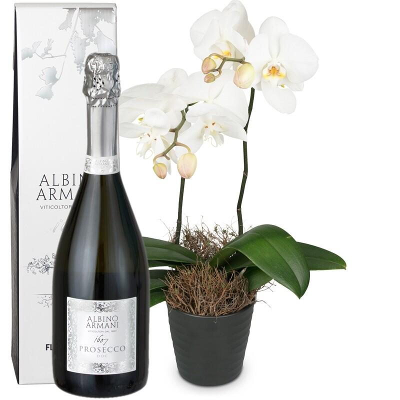 Orchidee weiss im Cachepot mit Prosseco 75cl