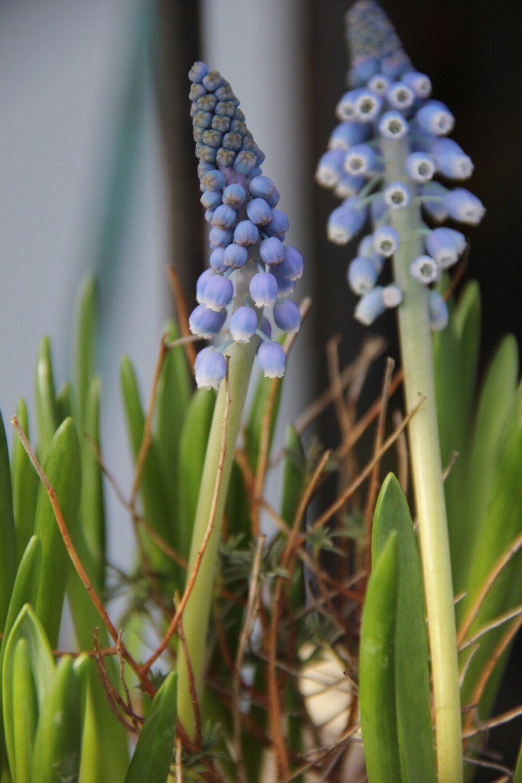 Blumenzwiebel trendig