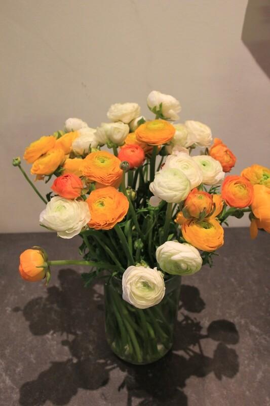Frühling-Pur