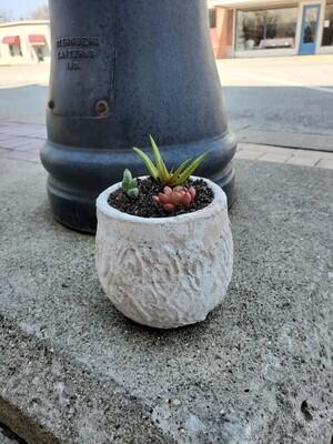 Chippy Pot w/3 succulents
