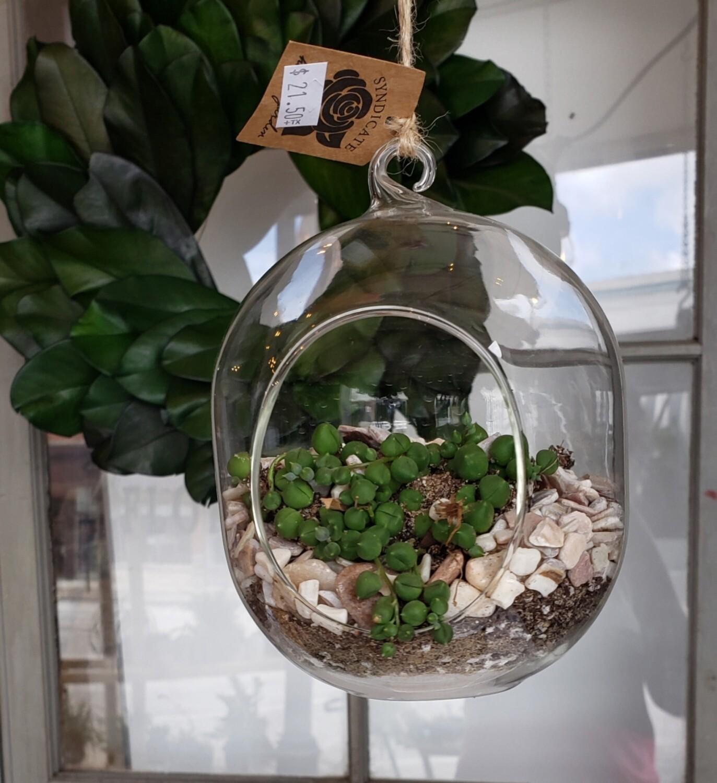 Hanging Terrarium w/ String of Pearls