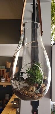 Hanging Terrarium w/ 2 succulent 1 air plant