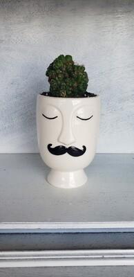 Cactus in Face container