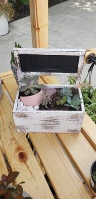 Succulent arrangement in wooden box