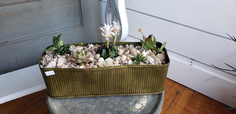 Succulent arrangement in rectangle metal tin