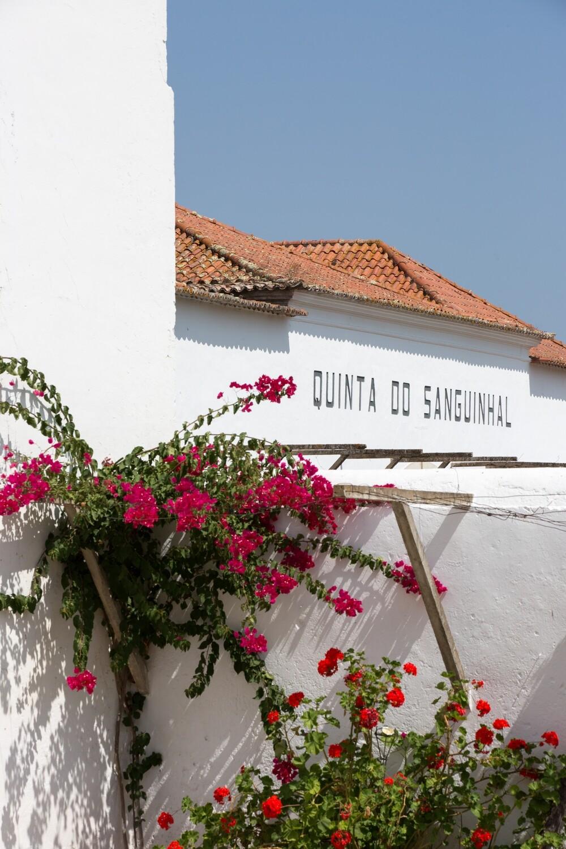 QUINTA DO SANGUINHAL - GUIDED ESTATE TOUR