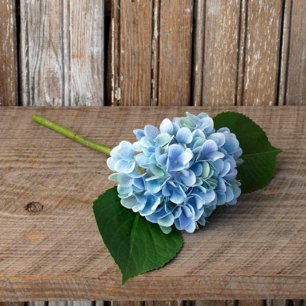 Small Hydrangea Blossoms
