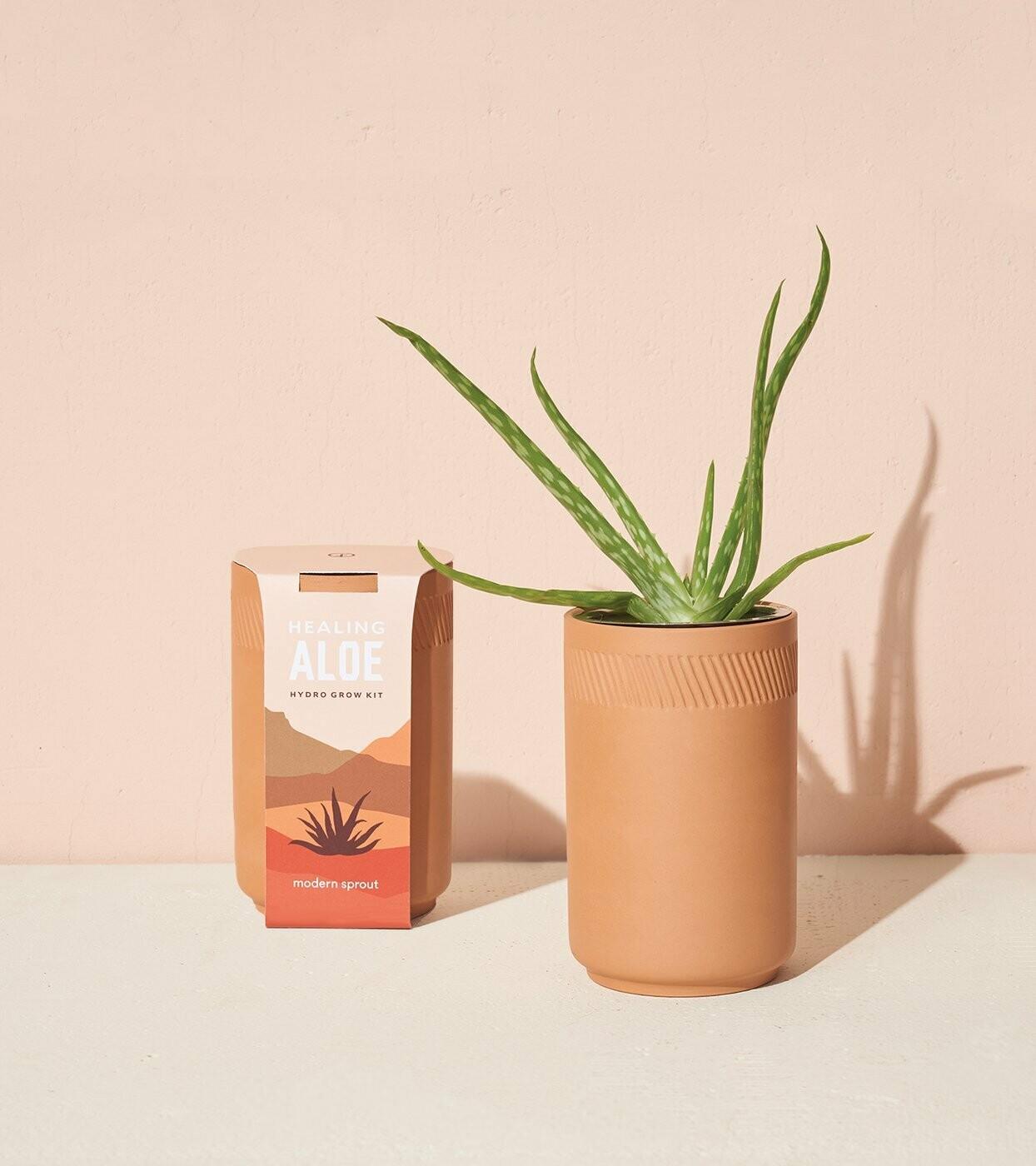 Terracotta  Aloe Plant