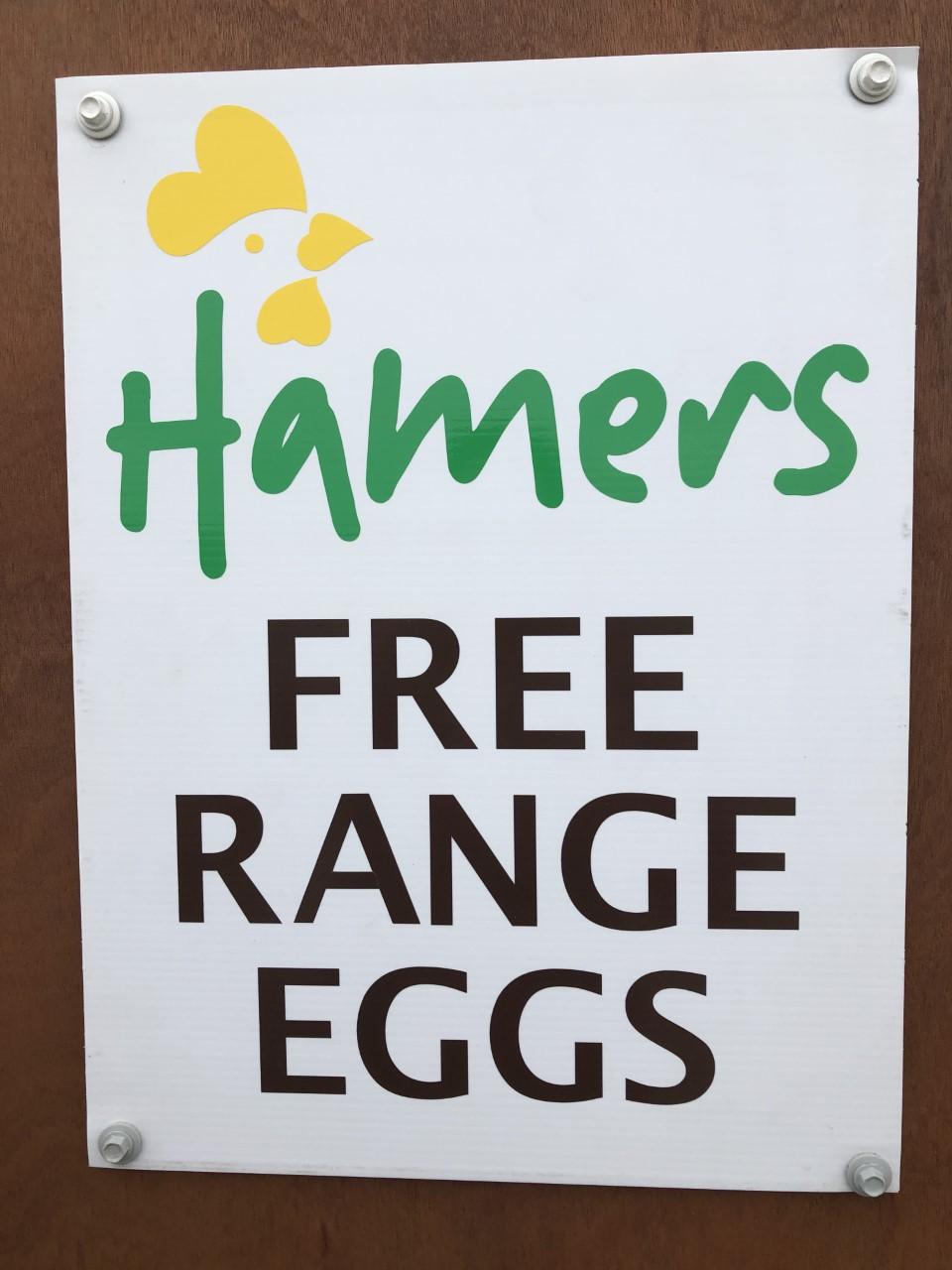 Hamers free range eggs x12