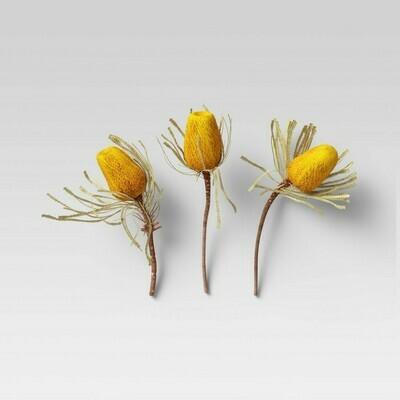 Dried Banksia Hookeriana