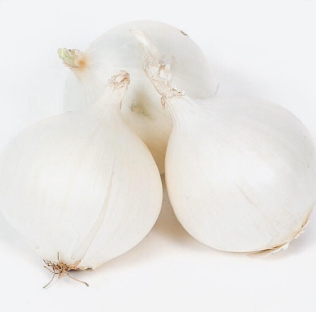 Jumbo White Onion One Each