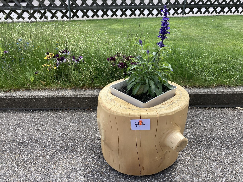 Blumentrog H4