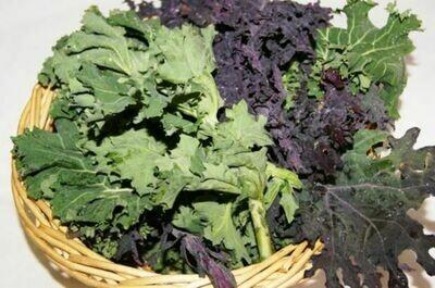 KALE Brassica oleracea Mix (Mixed Kale)