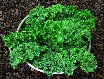 KALE Brassica oleracea Prizm F1