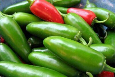 PEPPER Capsicum annuum  Jalapeno M (Hot Pepper)