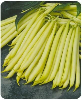 BEAN Phaseolus vulgaris Goldilocks (Yellow Wax Bean)