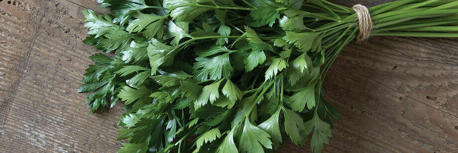 PARSLEY Petroselinum crispum Peione (Italian Flat Leafed)