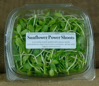 Sunflower Shoots - Mike's Micros