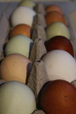 Eggs - dozen - Birchwold Farm