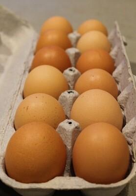 Eggs - dozen - Pat's Pastured