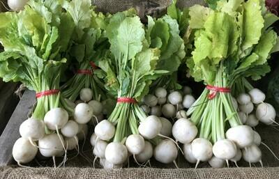 White Salad Turnips - 2lbs Bag