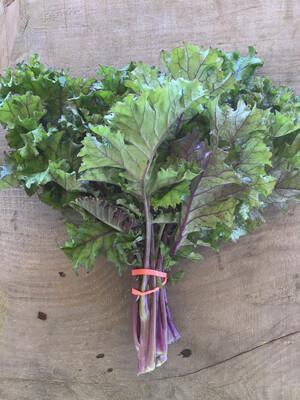 Kale - tender, purple - bunch