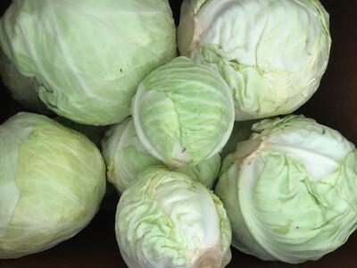 Green Cabbage - head