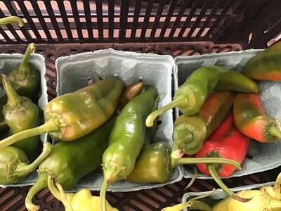 Anaheim Hot Chili Pepper