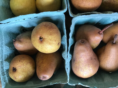 Bosc Pears - Quart