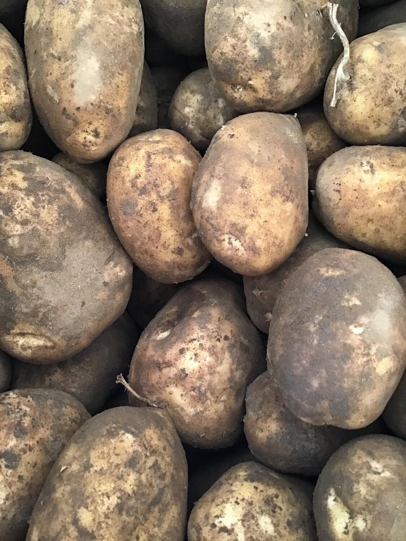 Gold Potatoes - Sparrow Arc Farm