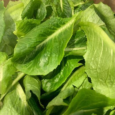 Romaine Lettuce Bags - FreshBox Farms