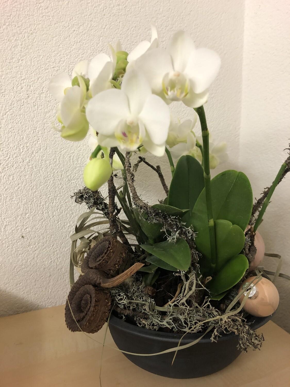 Orchideenschale