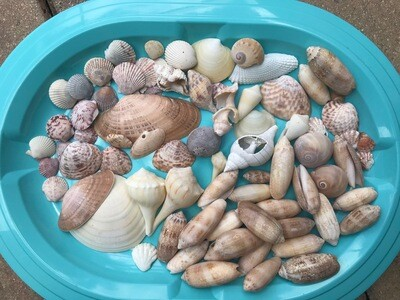 B - Lot of Assorted Shells - Free Shipping