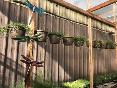 Regal Metallic Dragonfly Wall Decor - Red