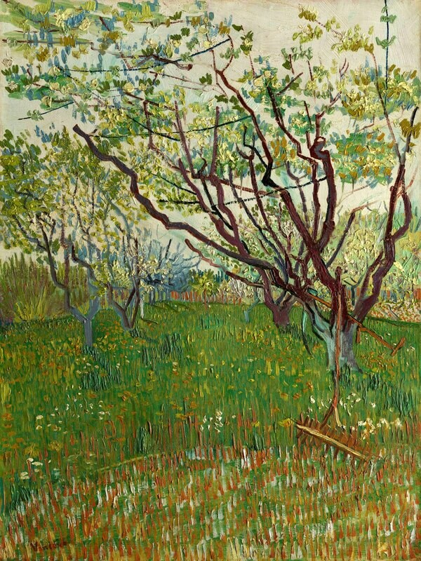 Vincent van Gogh | The Flowering Orchard