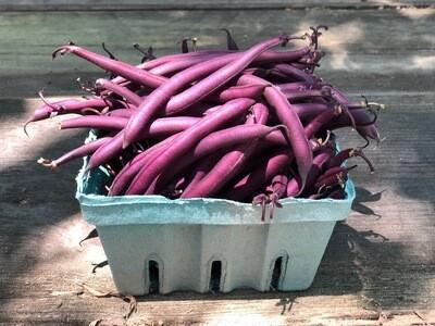 Organic Amethyst Bean Blue Sky Farms 1 lb