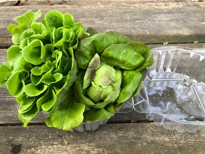 Local Baby Lettuce ~ 2 heads