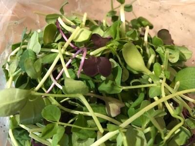 Salad Mix Greens Local North Carolina 1/4#