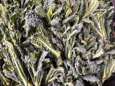 Certified Organic Dino Kale Tops Blue Sky Farms lb