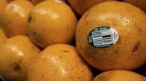 Oranges, FL Juice 10-4lb Bags