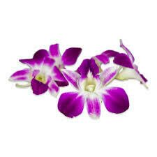 Orchids, Edible 100ct.