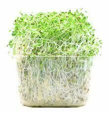 Sprouts, Alfalfa 12/1's