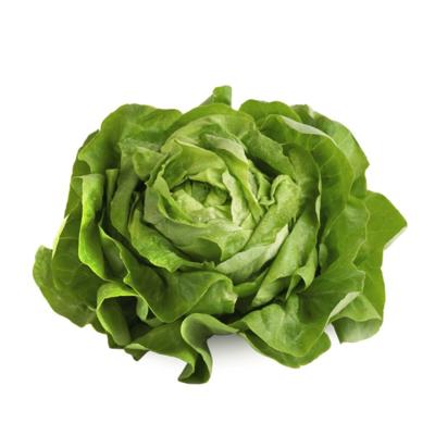 Lettuce, Boston Hydro