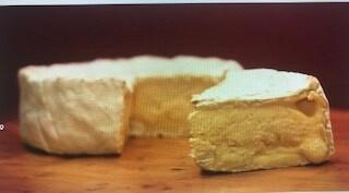 Cheese Camembert 7oz
