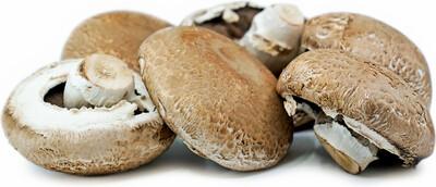 Mushroom Portabella 5#