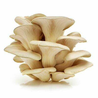 Mushrooms, 3# Oyster