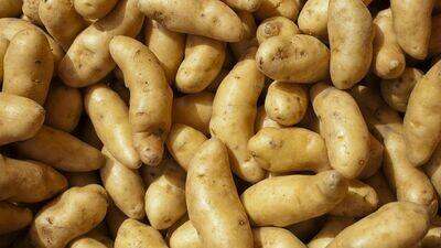 Potato, Fingerling